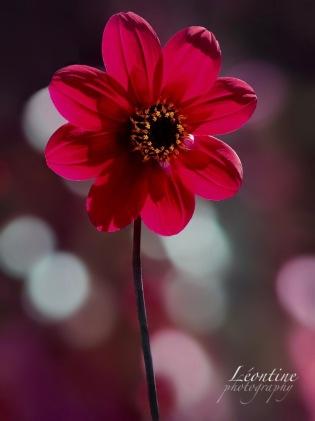 redflower 2 copy